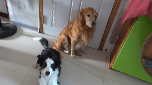 又到了遛狗时间,主人家的两只狗狗已经准备就绪