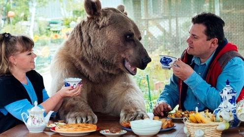 这对夫妇捡回一头小熊,一养就是25年,长到270斤堪比亲儿子