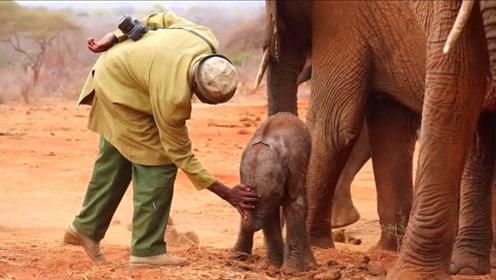 大象妈妈带刚出生的宝宝 来看望那些曾经救助过它的恩人