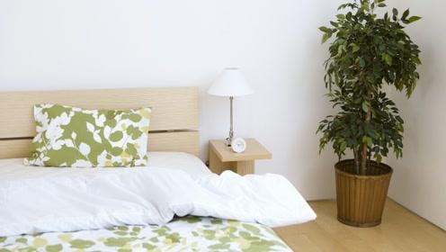 四种不适宜养在卧室的花,你家里面养有吗?快来看看了解一下