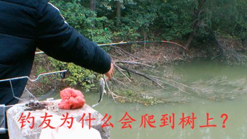 野钓:我在桥上钓鱼,不知道是什么原因?让钓友爬到树上