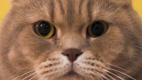 小猫真是不可预测的,刚以为要和好,就又闹起来了