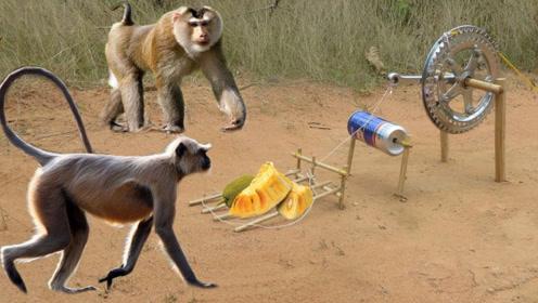 男子野外捕抓猴子,镜头记录设置陷阱全过程,网友:手法好神奇!