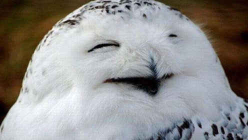 为什么猫头鹰一笑,就暗示有人去世?
