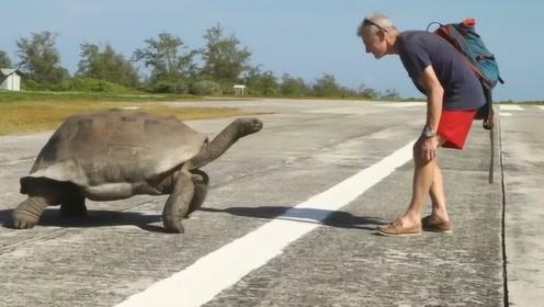 七旬老人挑衅巨龟,不料被巨龟追着跑,网友:您敢再快点吗?