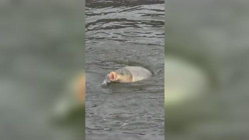 钓鱼:这鱼口可真滑呀!