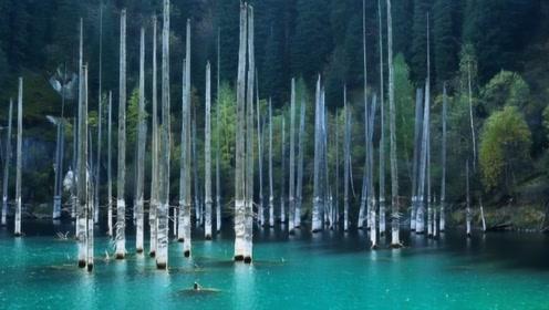 """世界奇观!树木倒着生长在湖泊里,湖底竟藏着""""水下迷宫""""!"""