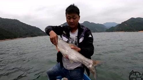带广州朋友冒着大风收网,收到这么大的白翘,还收到大桂花鱼