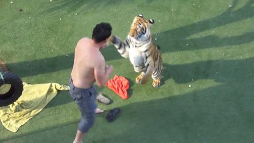 老外醉酒跑去老虎园挑衅老虎,场面非常激烈,网友:酒壮怂人胆!