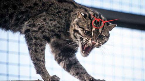 美女捡到一只猫,长大后频频往家里抓鱼,跟踪之后发现不得了!