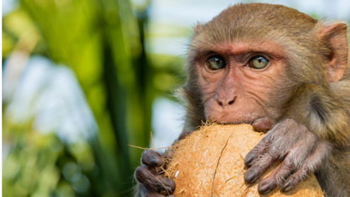 """属猴人:""""最苦命""""出生月份,不要再骗自己了,这是真的!"""