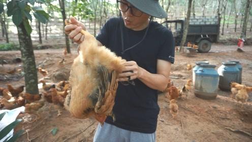 脚哥在山里养鸡,今天第一次卖鸡,友情价一只150,算贵吗?