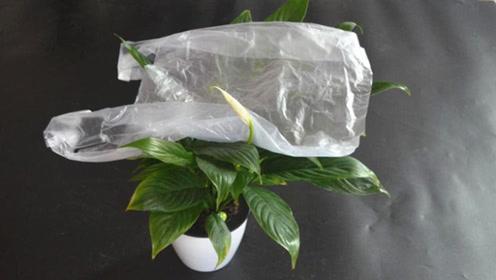 为什么要用花盆上放个塑料袋,用途太厉害了,家家都需要,快试试