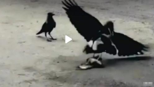 鸟妈妈为了保护孩子,以一敌二赶走两只大鸟,让人感动的母爱