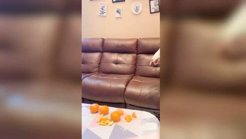 有人吃橘子吗,很甜很甜的那种哦!快来一起吃!