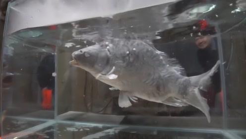 把鱼放进-200℃液氮会怎样?战斗民族亲自操作,放在温水里后还能复活?