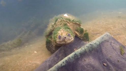 男子潜水发现一只奇异乌龟,仔细观察后,发现来头不简单