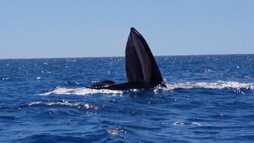 海面上竖着一条小船,渔民们走近一看,接下来的事让人不敢相信