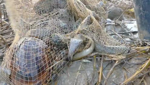 水沟里的大爆网,可怜的小乌龟竟然被遗弃了……