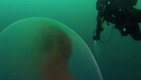 """最神奇的""""对视""""!挪威海底惊险巨型怪卵,就像是外星生物"""