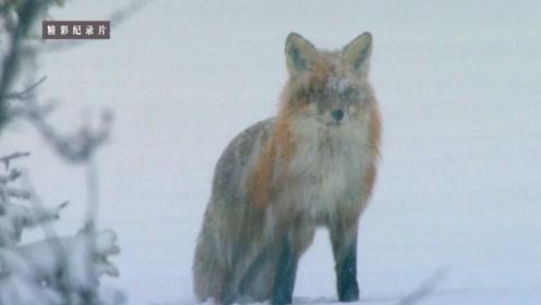 北欧寒冷的冬季,森林里都发生着什么故事呢?