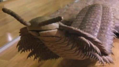 4亿年前称霸地球!恐龙碰到它都得绕道,如今见了鸡却得赶紧逃命!