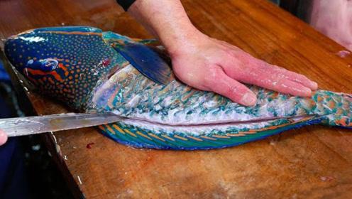 日本人真是什么都能吃,巨大石斑鱼竟秒变刺身,网友:看完口水流了一地!