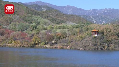 这里的枫叶红了!延庆玉渡山景区秒入金秋