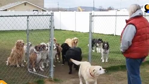 狗狗排队吃饭,最后一只狗狗格外傲娇,把主人乐坏了