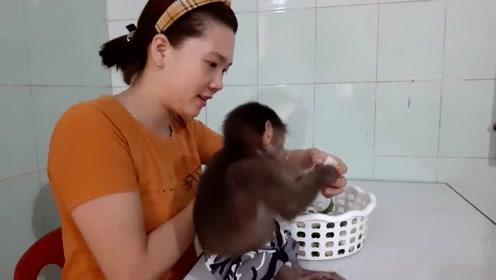 家里吃冬瓜,猴宝贝分到一大半,啃的贼开心啊