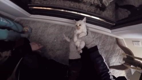 """男子几年前在雪地中救下一只小猫,如今变成""""跟屁虫"""",超级黏人"""
