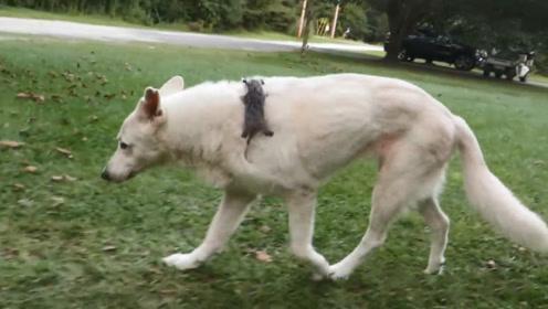 狗子出门溜达一圈,回来却带了个小东西,几年之后画风突变