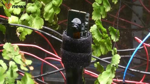 """世界首张植物""""自拍""""出炉:科学家用电池捕捉植物能量"""