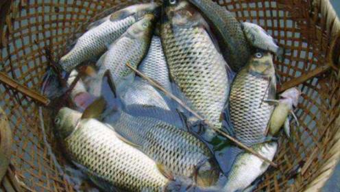 市场买鱼时,看到这种鱼甩头就走,送你也别要,抓紧提醒家里人