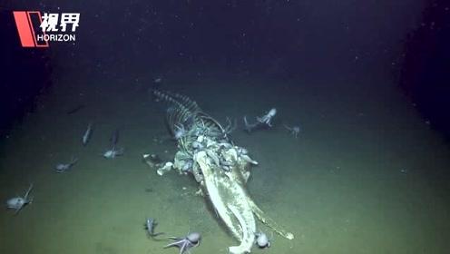 潜水艇在海底拍下罕见鲸落现象 巨大鲸鱼残骸吸引各种生物前来觅食