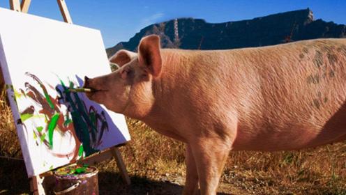 一只懂艺术的猪,随便一幅画就卖3000块,网友:猪生赢家!