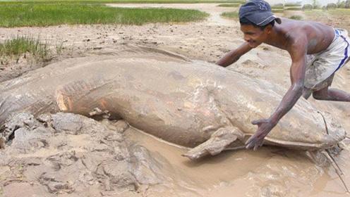 男子水坑捕鱼,2个小时的成果让人不敢信,网友:挖到鱼坑了?
