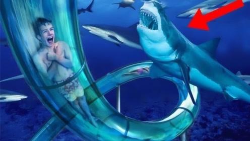 世界上最刺激的水滑梯,下滑瞬间被鲨鱼包围,你敢玩吗?