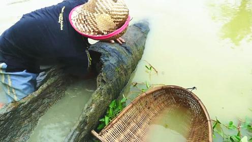 野塘中发现一根木头,村民好奇伸手一掏,没想到还真有意外的大收获