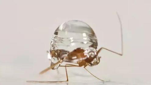你知道为什么蚊子不会被雨水砸死吗?一定不要被孩子问住了!