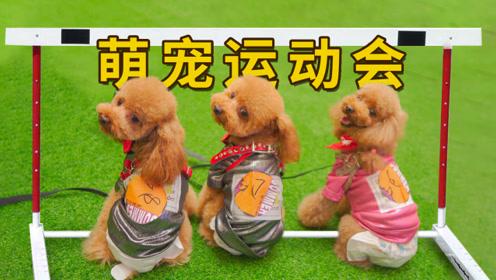 3只狗狗参加萌宠运动会,拿奖拿到手软,结果因实力太强被禁赛!