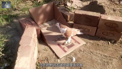 极具创意的3个自制捕鸟陷阱,鸟儿都没反应过来,就已中招了