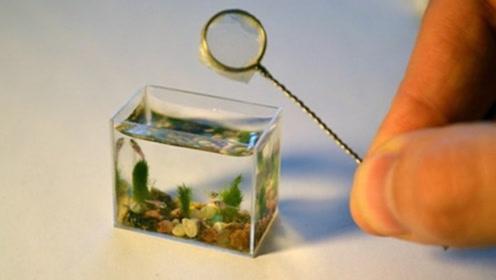 """老外自制""""迷你鱼缸"""",容量只有10毫升,养鱼都要用放大镜来看!"""