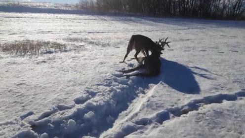 雪地被拖出一条小路,男子以为是动物捕猎,上前一看吓了一跳!