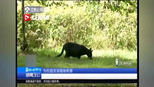 南京八所高校发起TNR行动 为流浪猫做绝育