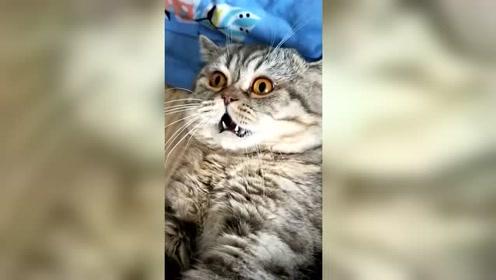 不就是卸了妆,猫咪就不认识了,这表情,够吓人的!
