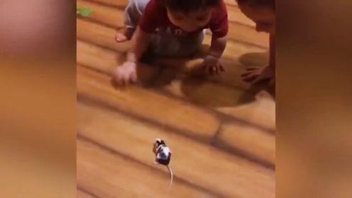 看到哥哥玩宠物鼠,弟弟直接被震惊了,这胆子真大啊!