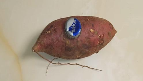 没想到在红薯上放一个啤酒盖,还有这么神奇作用,不学太亏了,快看看