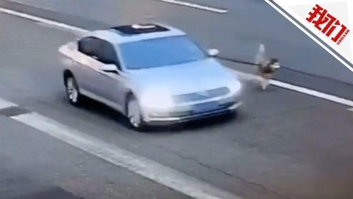男子开车把狗拴车外 狗子湿身狂奔路人看呆