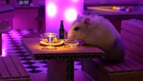 给小仓鼠打造一个迷你酒吧,它待这里都不想走了